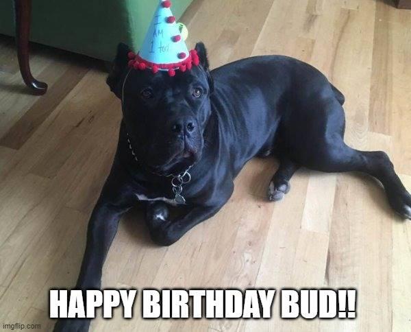 birthday bud.jpg