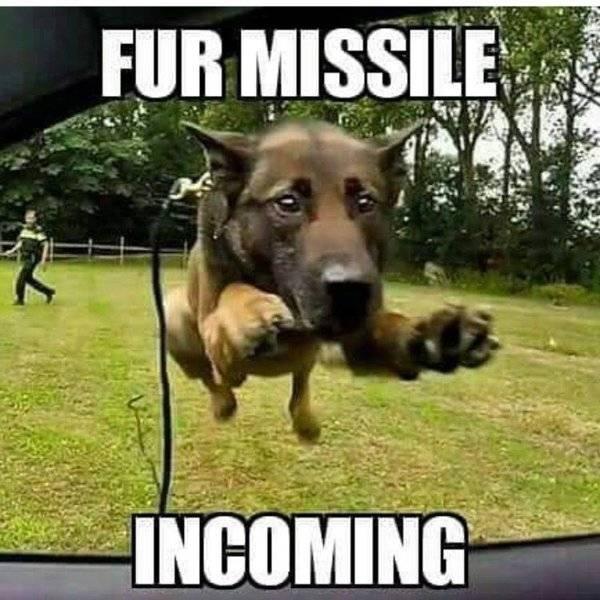 Dog Belgin Malanious Fur Missile -Incoming-.jpg