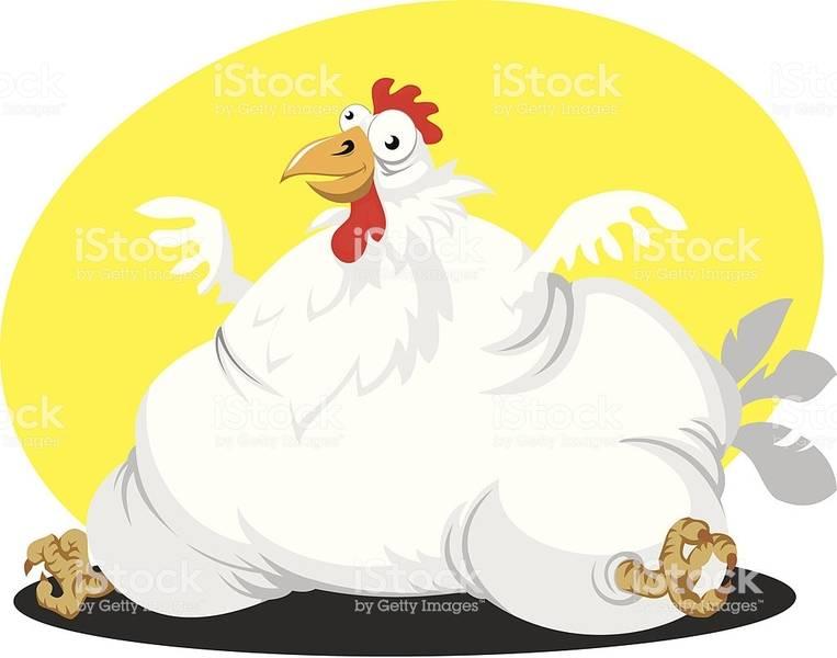 fat-chicken-illustration-id165722148.jpg