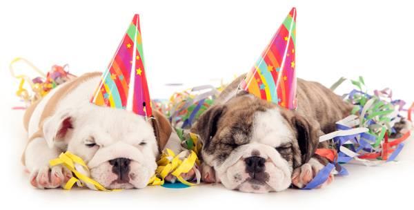 Happy Birthday Dog bulldog puppies.jpg
