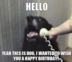 Happy Birthday Dogs calling to wish.jpg
