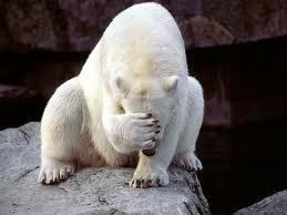 Smiley Facepalm Polar Bear.jpg