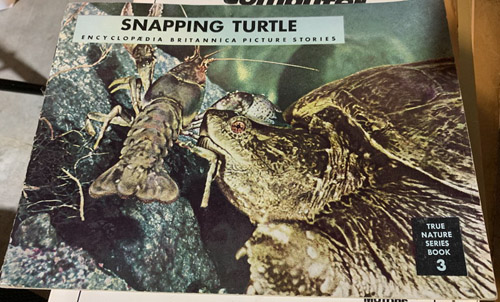 Snapping-Turtle.jpg